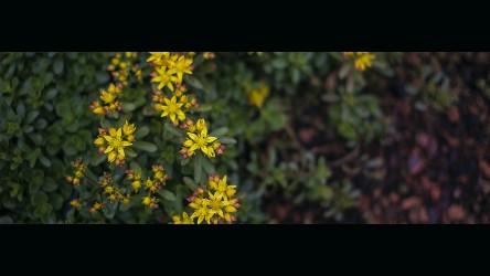 Stillblümchen