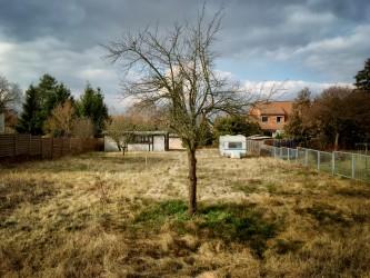 Yard mit Wald