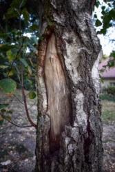 Plastischer Baum