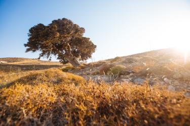 Küparissi